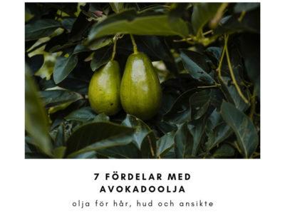avokadoolja 7 fordelar med oljan